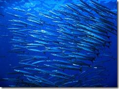 okinawa kerama diving265