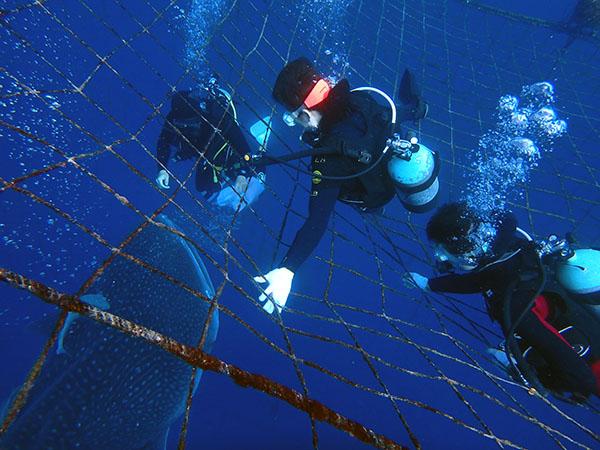 okinawa diving64.jpg