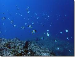 okinawa diving1002