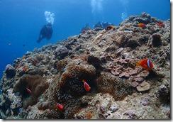 okinawa diving1023