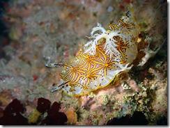 okinawa diving1034