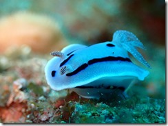 okinawa diving1035