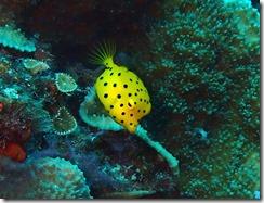 okinawa diving1038