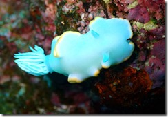 okinawa diving1041