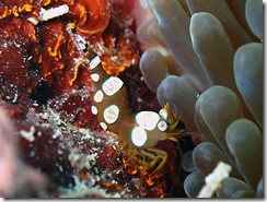 okinawa diving1044
