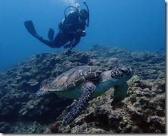 okinawa diving1046