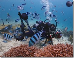 okinawa diving1047