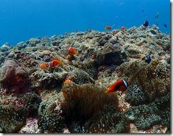 okinawa diving1049