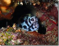 okinawa diving1050