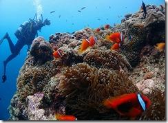 okinawa diving1051