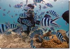 okinawa diving1054