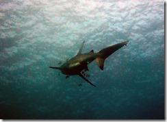 okinawa diving1057