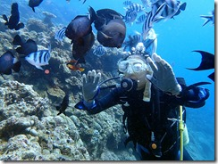 okinawa diving1061