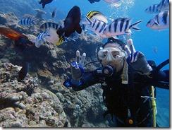 okinawa diving1062