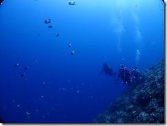 okinawa diving1063