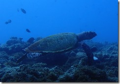 okinawa diving1069