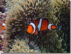 okinawa diving1071