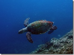 okinawa diving1079