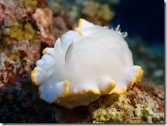okinawa diving1083