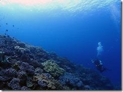 okinawa diving1092