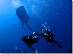 okinawa diving1108