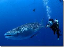 okinawa diving1109