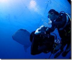 okinawa diving1111
