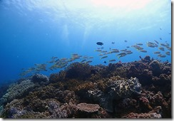 okinawa diving1113