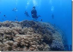 okinawa diving1114