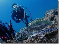 okinawa diving1115