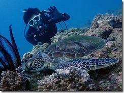okinawa diving1116