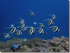 okinawa diving1120