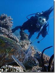 okinawa diving1121