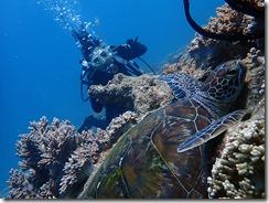 okinawa diving1122