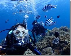 okinawa diving1125