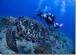 okinawa diving1127