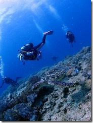 okinawa diving1128