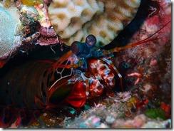 okinawa diving1131