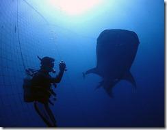 okinawa diving1146