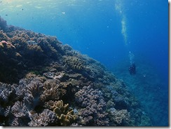 okinawa diving1153