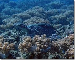 okinawa diving1154
