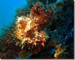 okinawa diving1158