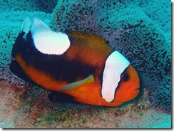 okinawa diving1163