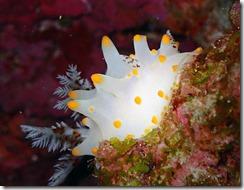 okinawa diving1164