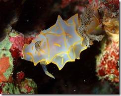 okinawa diving1165