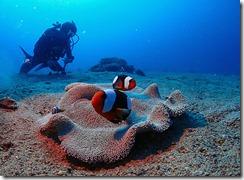 okinawa diving1170