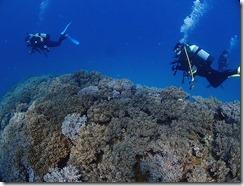 okinawa diving1172