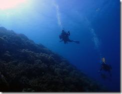 okinawa diving1173