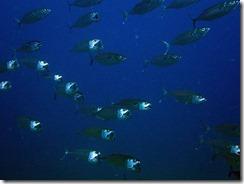 okinawa diving1178