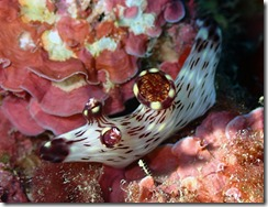 okinawa diving1181